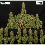 Tijera para manicurar Bud Clean – Lo mejor para la manicura de marihuana