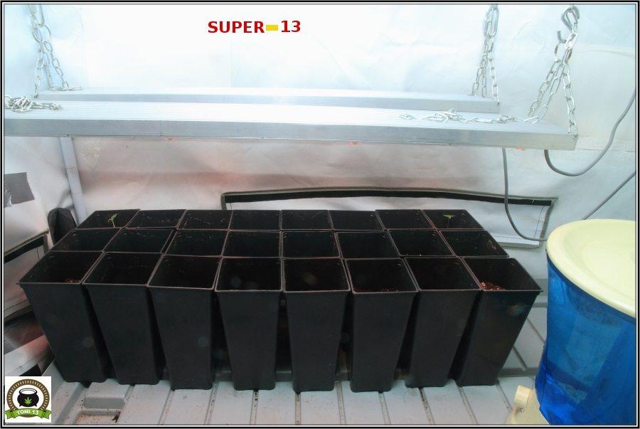 """Super-13: ""Próximo cultivo de toni13"