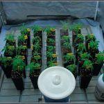 Bandeja de cultivo VDL para cultivos de marihuana de interior