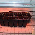 2- En un cultivo de interior de marihuana la luz es lo más caro
