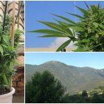 Cómo cultivar marihuana en exterior – Lugares y situaciones