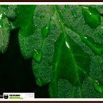 Fotosíntesis (cloroplastos y punto de saturacion lumínica)