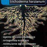 TRICHODERMA HARZIANUM 2 gramos 30 plantas – Dosis y análisis