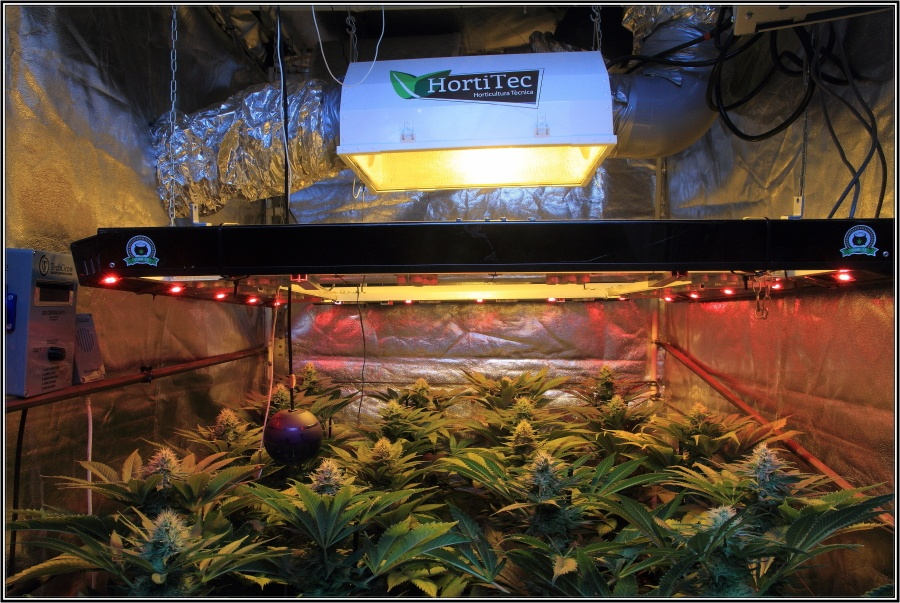 20-Termino 5º semana de floracion cultivo cannabis armario interior-2