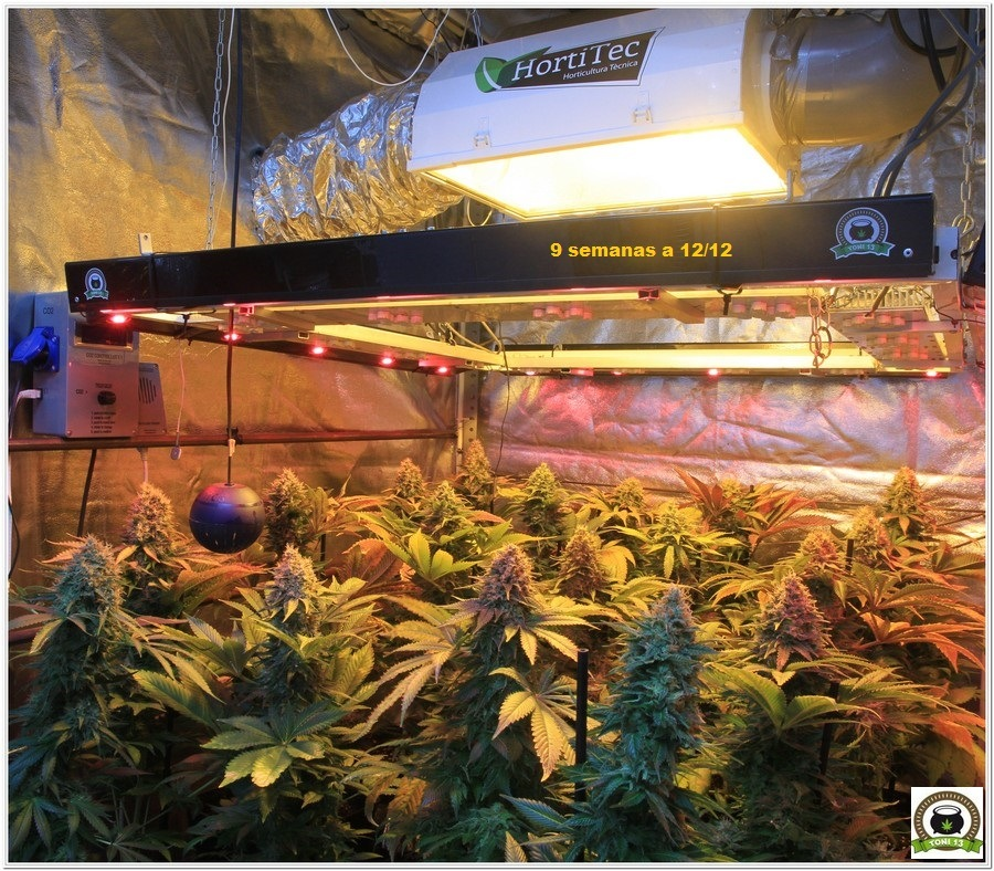 cultivo de marihuana armario de interior sodio LED floración 1