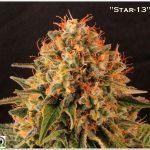 23- A rey muerto, rey puesto, lavado de raíces del cultivo de marihuana