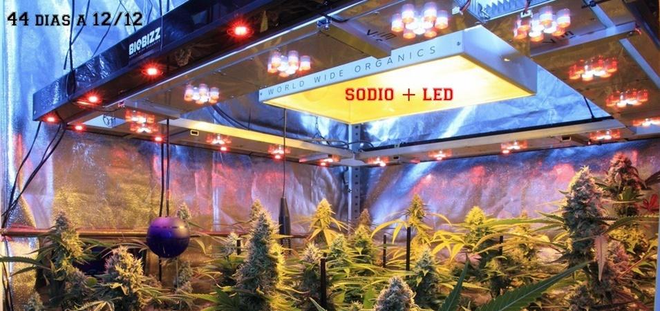 Cómo calcular la potencia lumínica en un cultivo de interior de marihuana