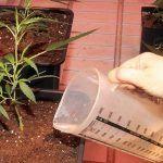 Cómo elegir el mejor contenedor de cultivo indoor para Marihuana