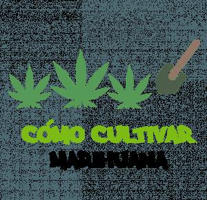 Guía de cómo cultivar marihuana