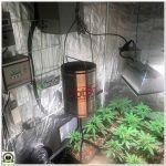6- Seguimiento marihuana LEC Criti-13: prevención y pongo 2 puntos de luz