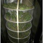 Armario de interior para cultivo de marihuana Dark Box