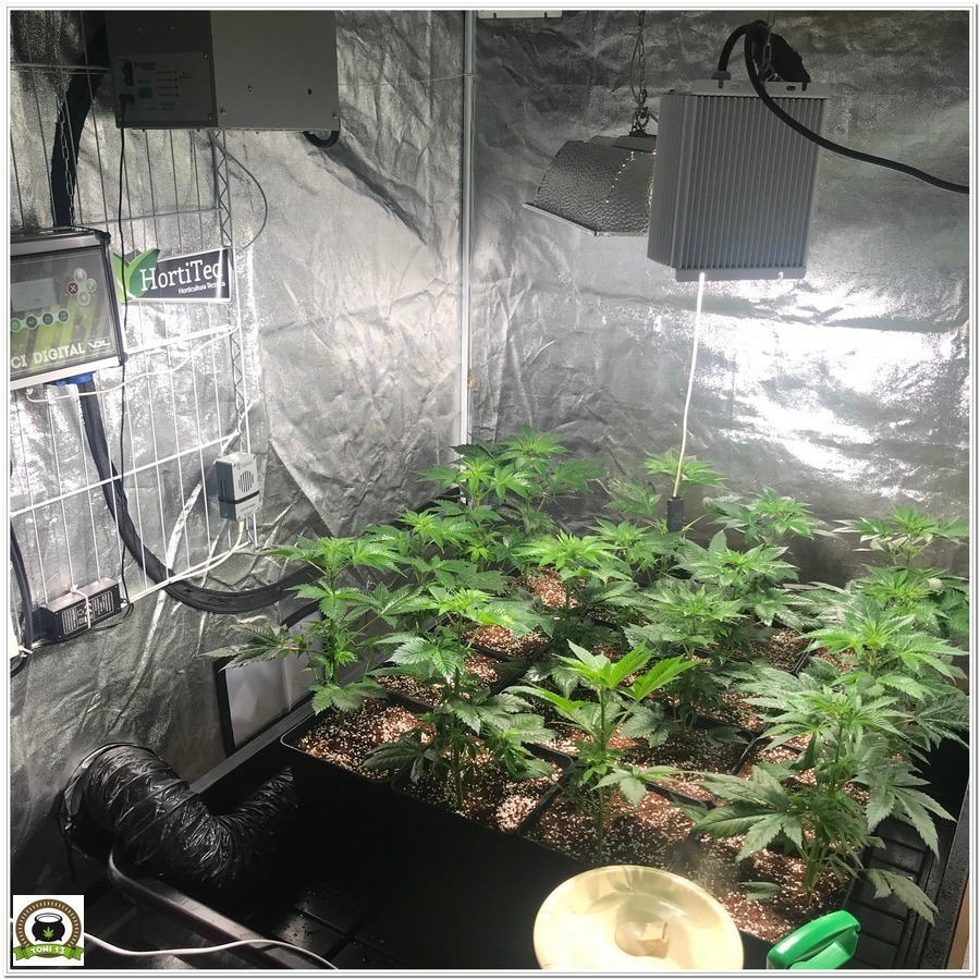 9-Cultivo marihuana medicinal con abonos Cyco-24