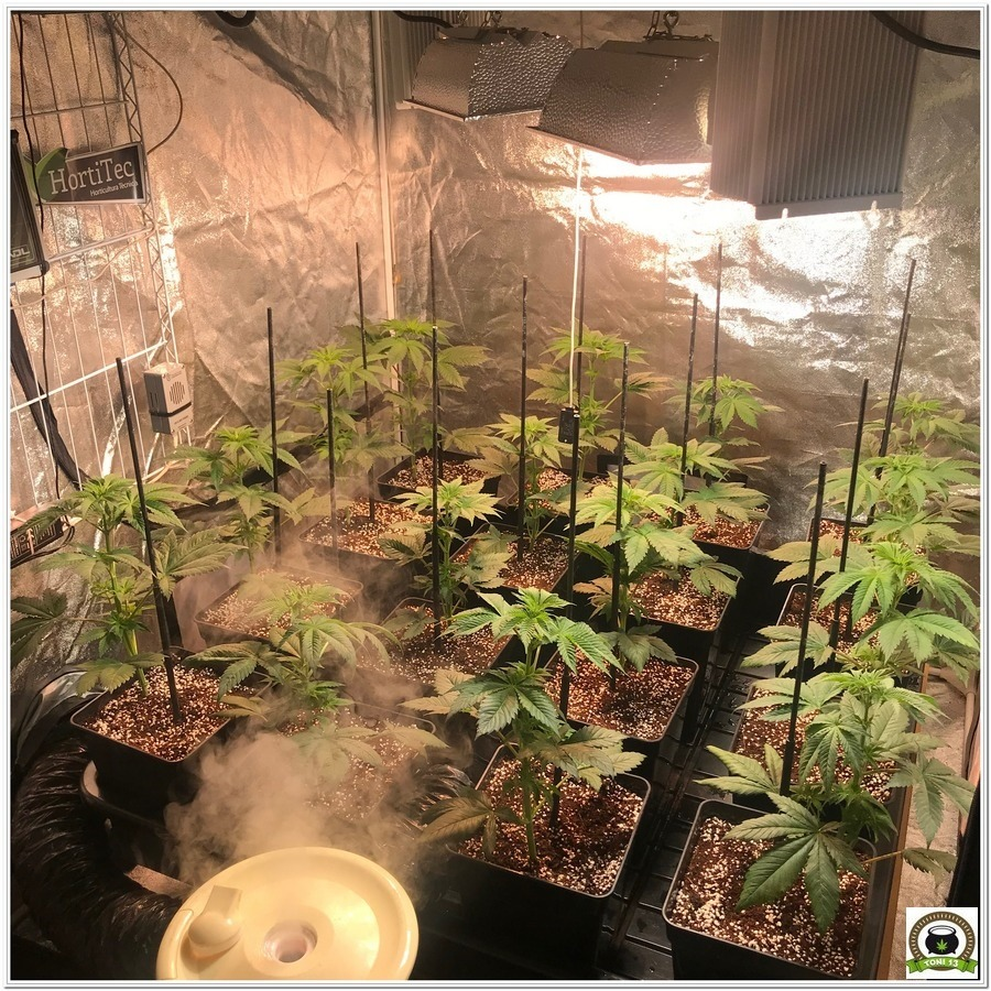 10-Cultivo marihuana medicinal con abonos Cyco-26