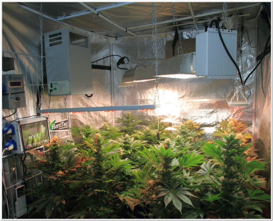 11-Cultivo marihuana medicinal Cyco-42