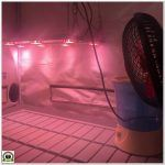 3- Cultivo marihuana medicinal: Limpieza del armario, sustrato y elementos