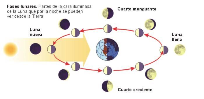 Fases de la luna para el cultivo de la plana de marihuana