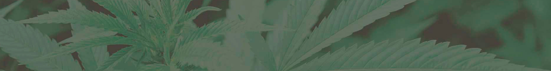 Cabecera cultivando medicina. Autocultivo marihuana.