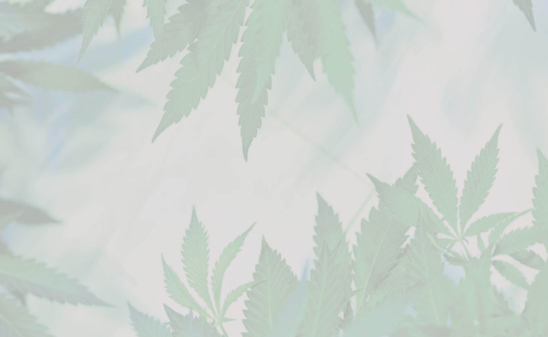 La cannabipedia. Guía de cultivo de cannabis.