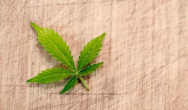 Contacto blog cultivo marihuana. Cultivando Medicina.