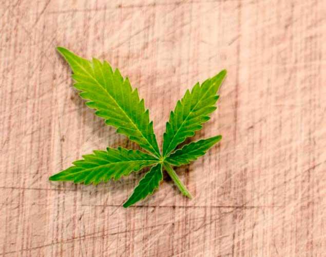 Contacto Cultivando Medicina Blog Cannabis