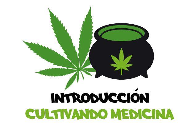 Introducción a cómo cultivar marihuana. Guía cultivo marihuana para principiantes.
