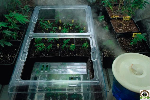 Invernadero para marihuana. Productos para cultivar marihuana