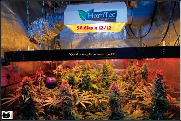 Iluminación marihuana. Productos para el cultivo de marihuana.