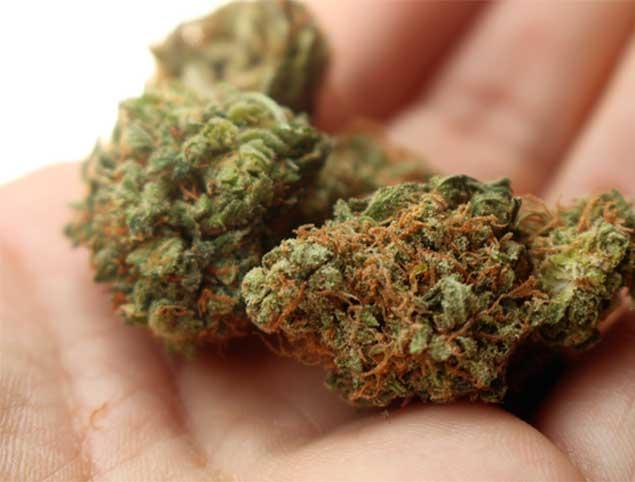 Proveedores autocultivo marihuana.