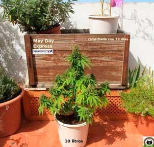 Seguimiento cultivo positronics dentro y fuera. Cultivo interior. Cultivo exterior.