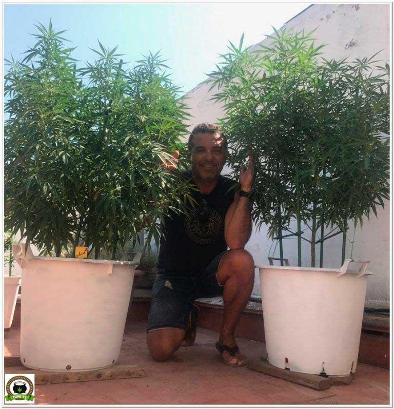 Seguimientos de cultivo de marihuana y cannabis.
