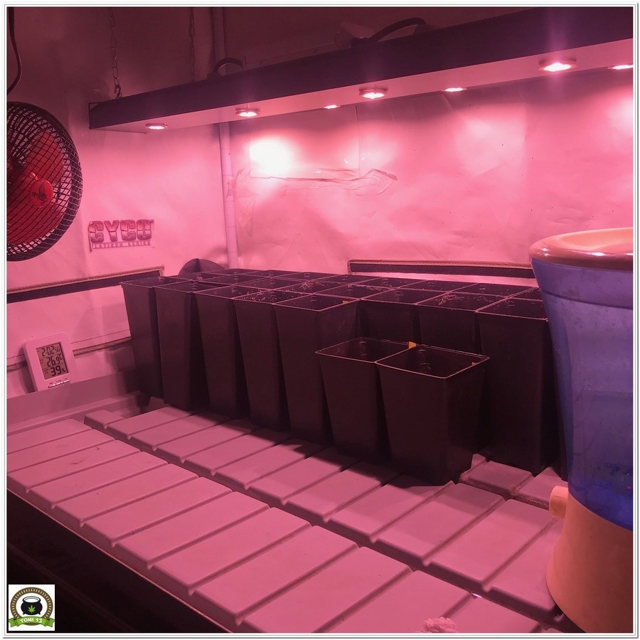 Led cultivo de marihuana solux kappa-1