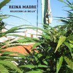 43 errores típicos del cultivo de marihuana y cómo evitarlos