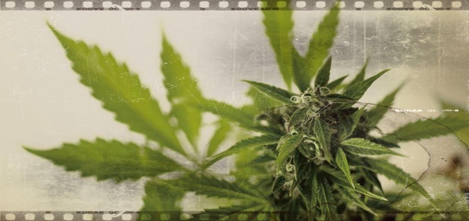 8 documentales de marihuana que tienes que ver. Películas de marihuana.