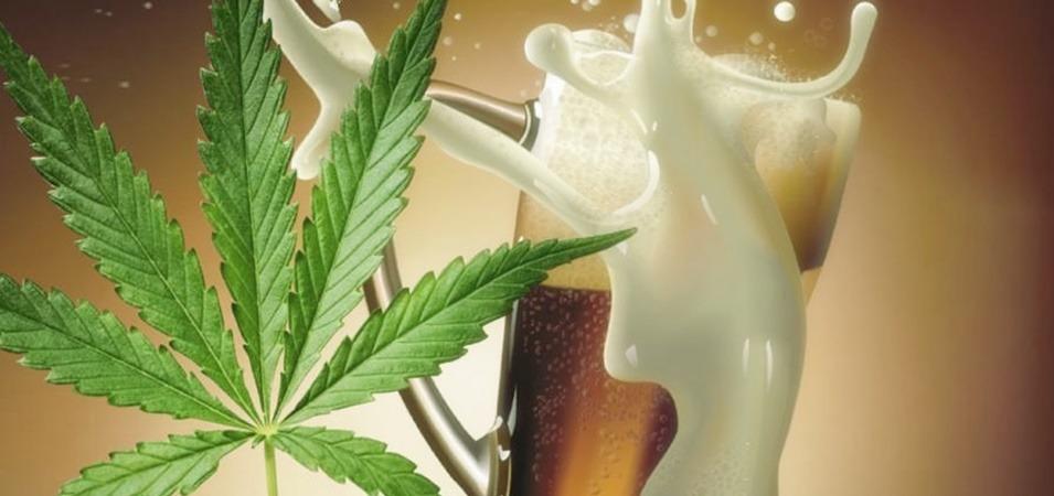 Cómo elaborar cerveza con marihuana o cerveza con cannabis casera.