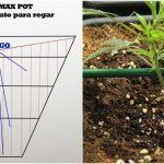 Cómo regar con maceta radicular plantas de marihuana