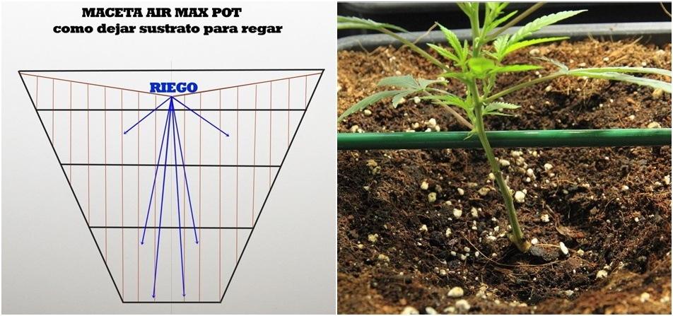Cómo regar con maceta radicular plantas de marihuana. Maceta Air Max Pot.