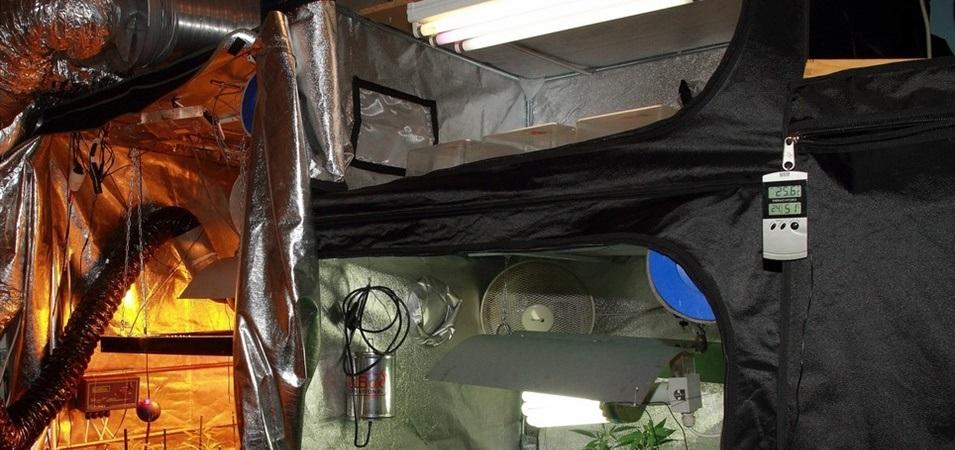 Cómo elegir un armario de cultivo de marihuana interior.