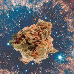 Marihuana en el espacio exterior: Experimentos de Cannabis en el espacio