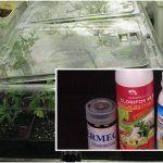 Cómo aplicar la triple vacuna en esquejes de marihuana – hongos, ácaros, trip, pulgón…
