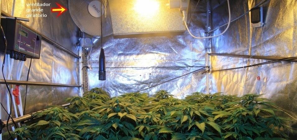 Cómo utilizar un ventilador grande en los cultivos de marihuana.
