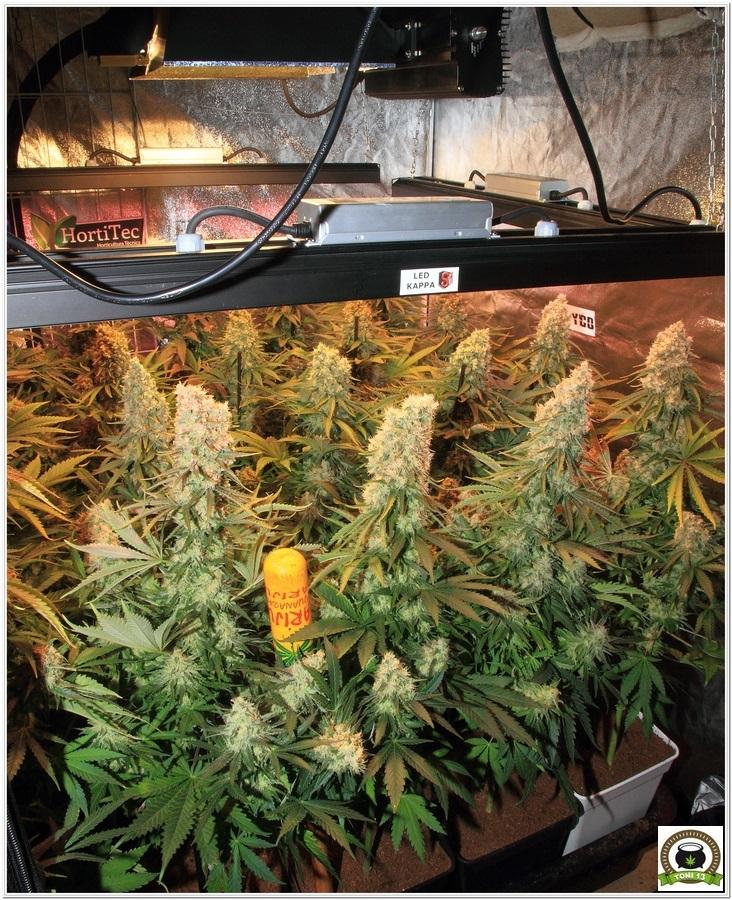 armario cultivo interior led lec maximiza produccion