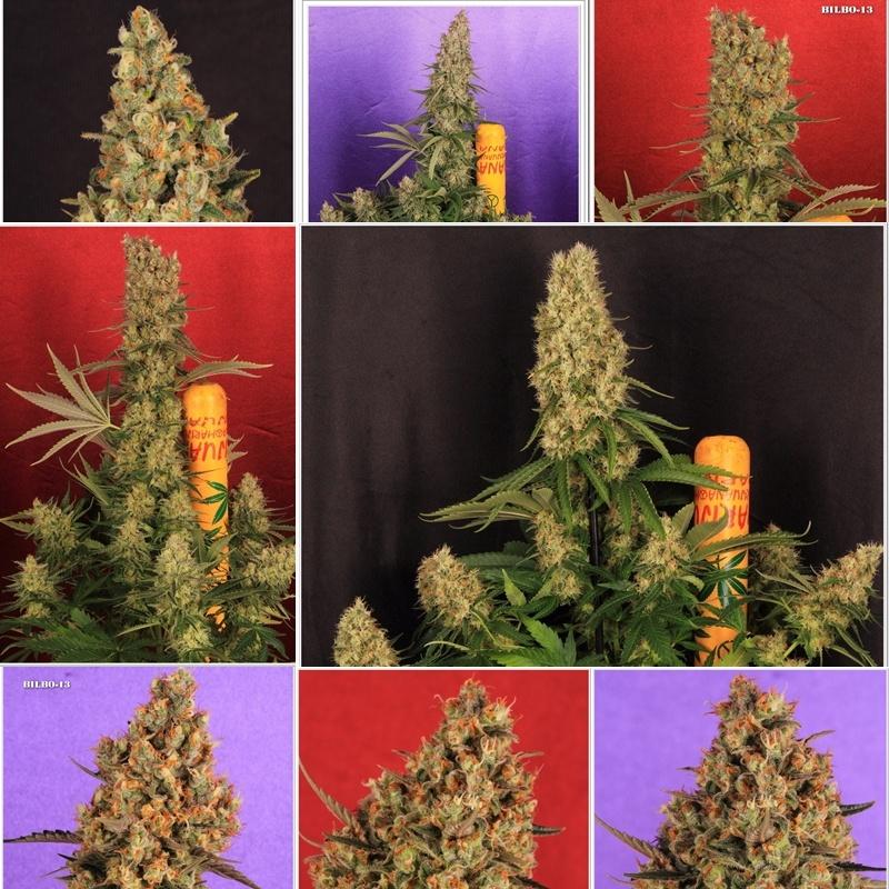 plantas marihuana cultivo interior cyco solux