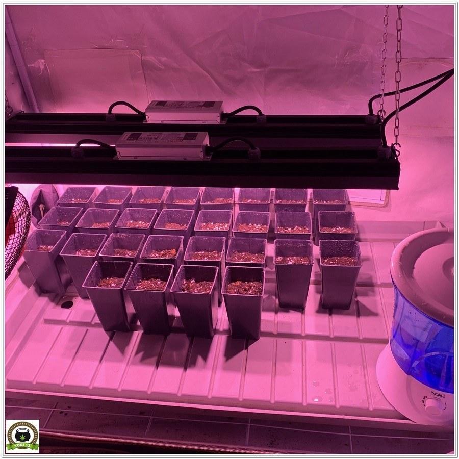 2-Con toda la artillería: Lec+Led Solux, CO2, S.O.G y coco en 2 m2.-1