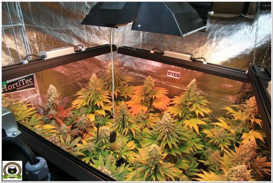 LEC 630w selecta II solux cultivo indoor marihuana