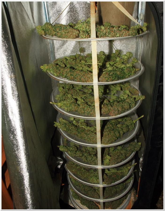 cultivo interior marihuana dos metros LED LEC 5
