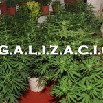 ¿Qué harías tú para la legalización del cannabis?