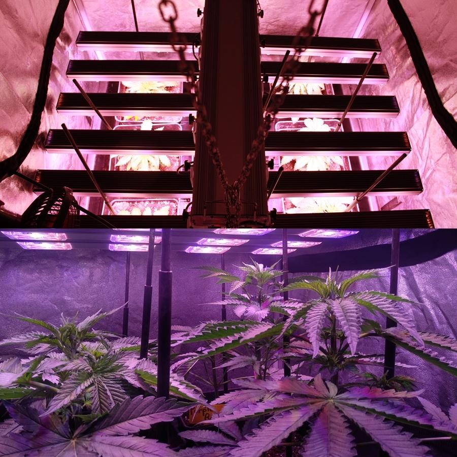 cultivo marihuana extremo verano interior 2 pro-xl organic