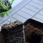 Cómo elegir el sustrato adecuado para el cultivo de marihuana y cómo reutilizarlo