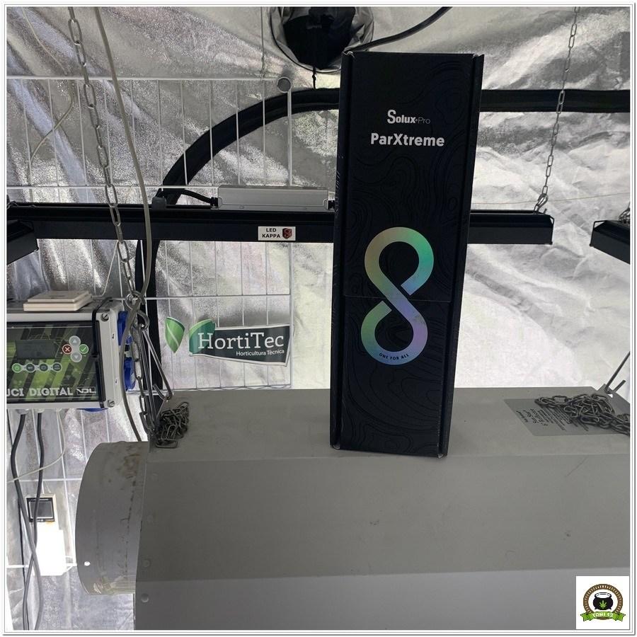 4-Barney`s Farm y toni13: Blueberry OG, Cookies Kush, Shiskaberry y Blue Gelato 41-3
