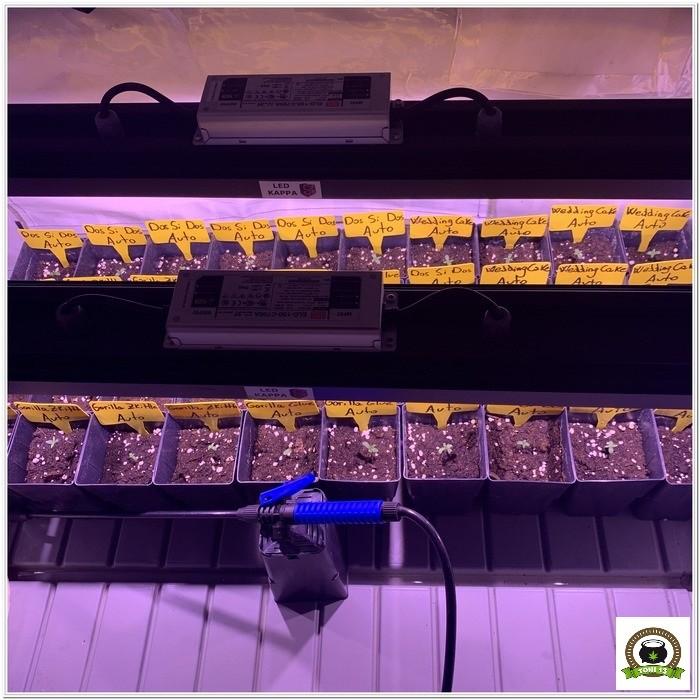 4-Barney's Farm y toni13: Automáticas I-1
